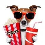 Recomandări filme de comedie